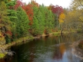Muskegon River Colors - Leota, Michigan