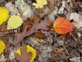 Autumn Glory on the Forest Floor