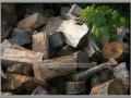 Woodpile and Thimbleberry Leaves