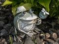 Beware of Frog