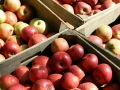 Fresh apples by the crate