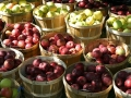 Fresh apples by the bushel