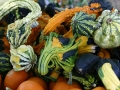 Gourds, squash, and pumpkins