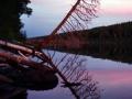 Leaning Tree, Hatchet Lake - Isle Royale National Park, Michigan
