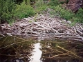 Beaver Lodge on Siskiwit
