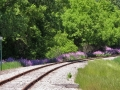Tracks and Phlox