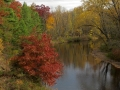 Muskegon River Colors - Leota, Michigan