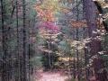 Backwoods Trail - Leota, Michigan