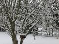 Winter in Wisconsin