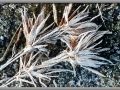 Nature's Frosted Finery