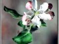 Apple Blossum