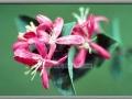 Pretty in Pink (species unknown)