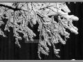 Snowy winter day in Wisconsin