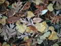 Mixed Autumn Leaves Floating on Pond