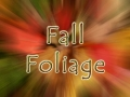 Fall Foliage Color Burst