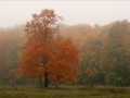 Foggy October Morning - Alger County, Michigan
