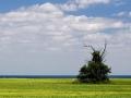 Field south of Port Washington overlooking Lake Michigan