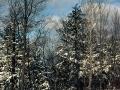Sunny Winter Day - White Pine, Michigan