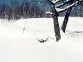 Hungarian Falls Snowshoeing