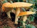 Photogenic mushrooms