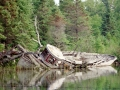 Abandoned boat in Chippewa Harbor