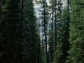 Lulu City/Colorado River Trail Hiking