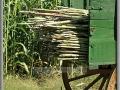 Sorghum Wagon